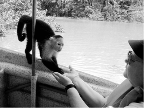 Monkeys come right down onto the boat and eat out of your hand.